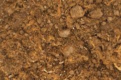 близкая почва вверх Стоковая Фотография