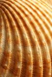близкая раковина моря вверх Стоковая Фотография