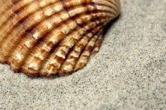 близкая раковина моря вверх Стоковое фото RF