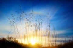 близкая трава вверх Стоковые Фотографии RF