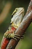 близкая цветастая ящерица вверх Стоковое Фото