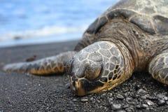 близкая черепаха моря вверх Стоковая Фотография RF