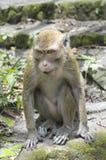 близкие джунгли monkey вверх Стоковая Фотография RF
