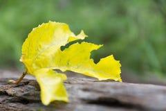 близкие зеленые листья вверх Зеленые свежие заводы на предпосылке природы Стоковые Изображения