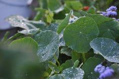 близкие капельки росы засевают вода травой утра листьев совершенная поднимающая вверх Стоковое Фото