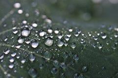 близкие капельки росы засевают вода травой утра листьев совершенная поднимающая вверх Стоковое Изображение RF