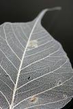 близкие листья вверх по белизне Стоковая Фотография