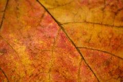 близкие листья вверх по венам Стоковые Изображения RF