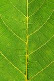близкие листья вверх Стоковая Фотография