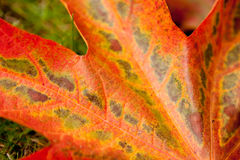 близкие листья вверх стоковые фото