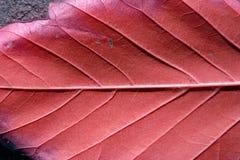 близкие листья вверх Стоковое Изображение