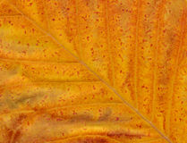 близкие листья вверх Стоковые Изображения RF