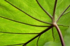 близкие листья вверх Стоковые Изображения