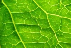 близкие листья вверх Стоковое фото RF
