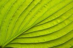 близкие листья вверх Стоковая Фотография RF