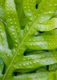 близкие листья папоротника вверх Стоковая Фотография