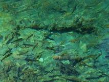 близкие рыбы вверх Стоковые Изображения RF