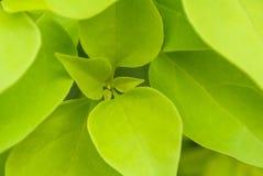 близкие свежие зеленые листья вверх стоковое фото rf