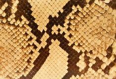 близкие текстуры snakeskin Стоковая Фотография