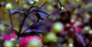близкие цветки вверх в солнечном дне, заход солнца st Конец-вверх стоковое фото