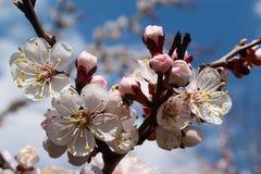 близкие цветки поднимают белизну Стоковые Изображения
