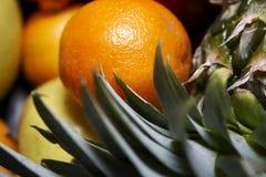 близкие экзотические плодоовощи вверх Стоковая Фотография