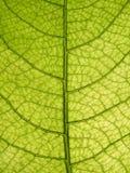 близкий вал листьев вверх Стоковое фото RF