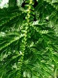 близкий взгляд лист папоротника с малыми листьями Стоковые Фото
