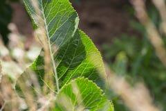 Близкий взгляд на vegetable заводах на саде коттеджа Стоковое Изображение RF