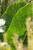 Близкий взгляд на vegetable заводах на саде коттеджа Стоковое Фото