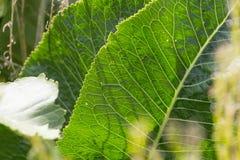 Близкий взгляд на vegetable заводах на саде коттеджа Стоковые Изображения