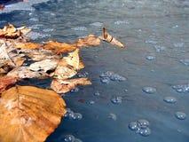 близкий восходящий поток теплого воздуха весны вверх Стоковое Изображение