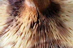 близкий гриб вверх Стоковое фото RF