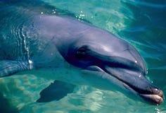 близкий дельфин вверх по одичалому Стоковые Фото