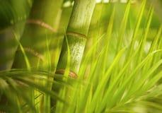 близкий зеленый завод вверх стоковые изображения