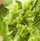 близкий зеленый салат вверх Стоковая Фотография RF