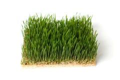 близкий зеленый цвет травы вверх Стоковые Фото