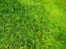 близкий зеленый цвет травы поля вверх Стоковое Изображение