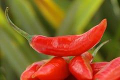 близкий красный цвет горячего перца вверх Стоковая Фотография