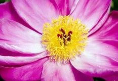 близкий красный цвет цветка вверх Стоковые Фото