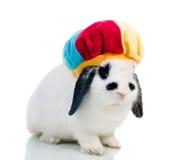 близкий милый изолированный пасхой кролик o вверх стоковое изображение rf