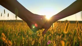 Близкий отснятый видеоматериал руки принимая другие руку и удерживание, красивый вид пшеницы или поле рож во время захода солнца  видеоматериал