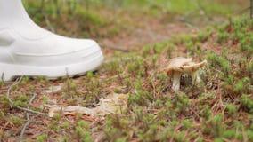 Близкий поднимающий вверх взгляд гриба в лесе на земле Человек стучает грибом с белым ботинком видеоматериал