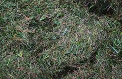 Близкий поднимающий вверх взгляд на луге с зеленой травой и некоторыми небольшими цветками стоковое изображение