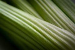 Близкий поднимающий вверх взгляд нервюр сельдерея стоковое фото rf