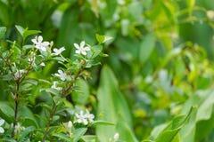 Близкий поднимающий вверх цветок в полдень в парке или саде с предпосылкой нерезкости стоковая фотография rf