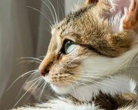 Близкий портрет кота стоковые изображения rf