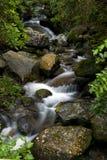 близкий поток Стоковое Фото