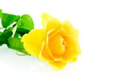 близкий розовый поднимающий вверх желтый цвет Стоковая Фотография