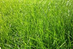 близкий свежий зеленый цвет травы вверх Стоковое фото RF